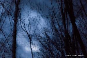 Woods in twilight