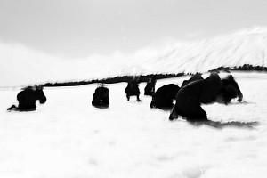 Women in black in the snow