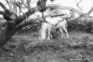 White horse, Black donkey